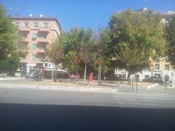 Roma Capitale. Dopo i prati stanno morendo gli alberi