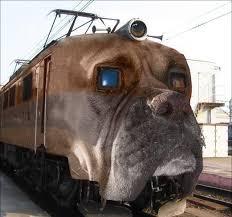 Cani e vacanze. Ottima l'iniziativa del biglietto del treno a 5 euro in agosto!