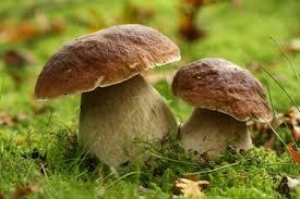 Funghi. Consigli per gli acquisti
